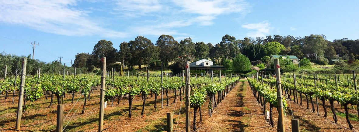 Myattsfield Winery in the Bickley Valley and Perth Hills wine region