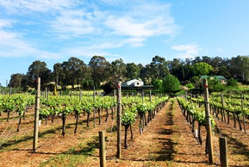 Beautiful Myattsfield Vineyards and Winery in the Perth Hills and Bickley Valley wine region