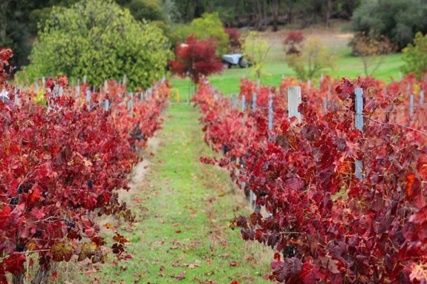 Bickley Valley vineyards and orchards in Autumn
