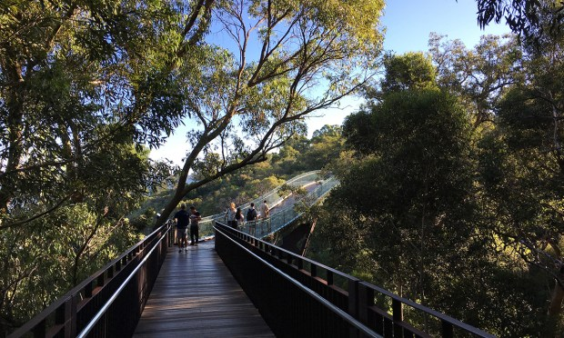 The famous Kings Park in Perth and botanic gardens