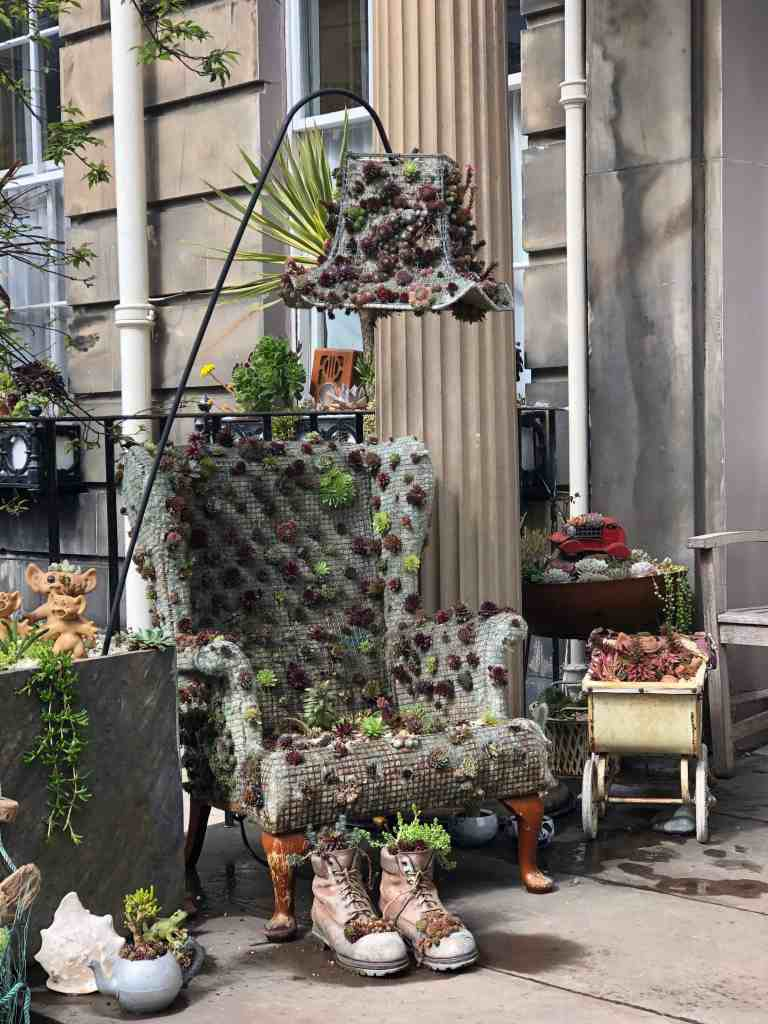 succulent Upcycle projects