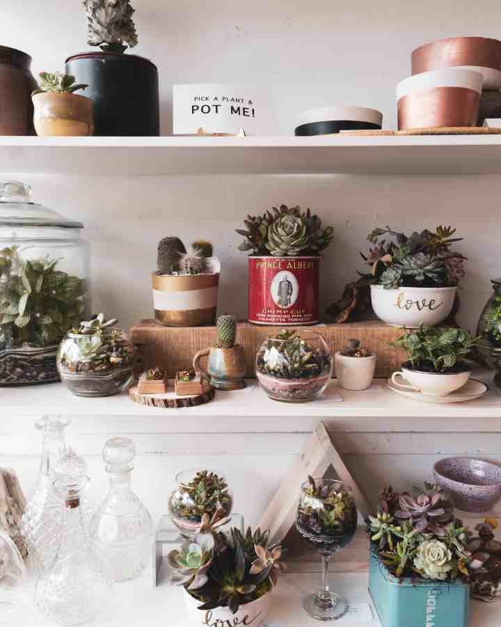 Top 10 Upcycles for succulents