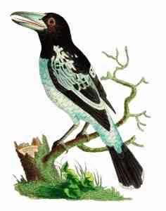 free printable bird illustration