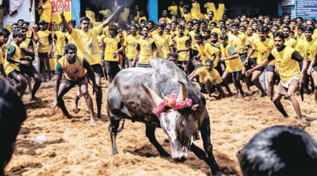 alanganallur-jallikattu-live-streaming-videos