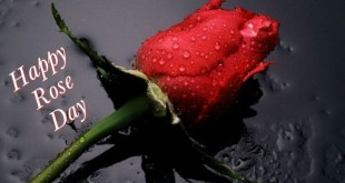Happy Rose Day SMS and Messages