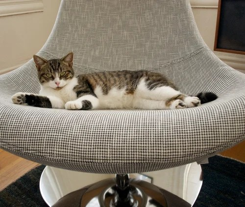 How to keep cats off furniture