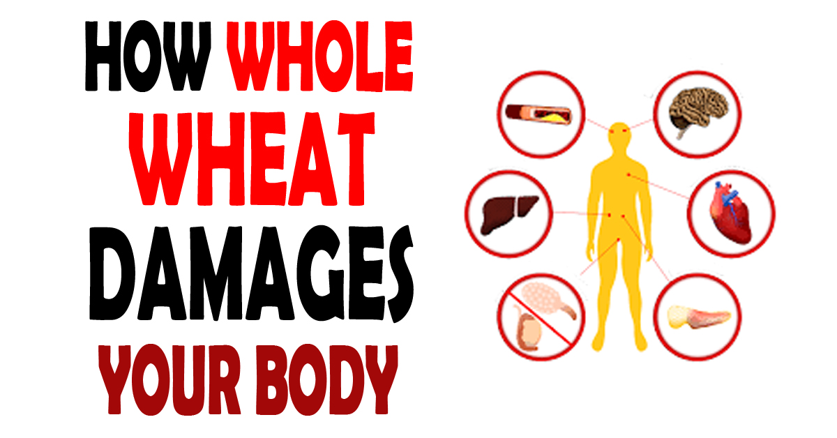 How Whole Wheat Damages Your Body