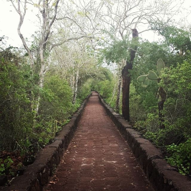 Galapagos Islands, Path to Tortuga Bay, use your airline and credit card points to take you there!