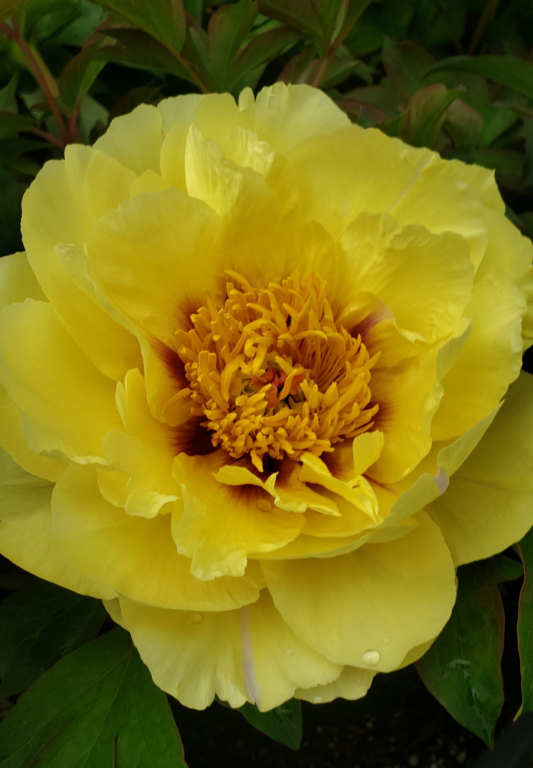 You are currently viewing PERENNIAL PLANTS AND FLOWERS