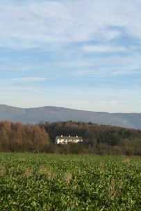 Beet, trees, cottages, hills and sky
