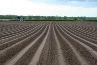 Undulating potato beds