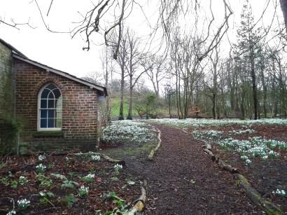 Snowdrop walk at Lytham Hall