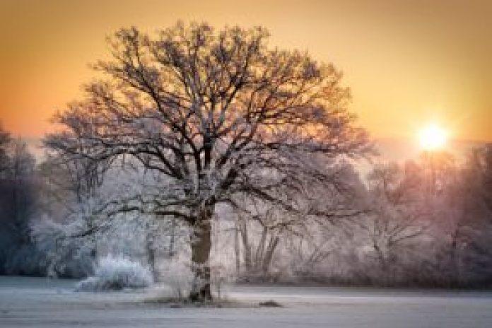 冬日阳光(pixabay)
