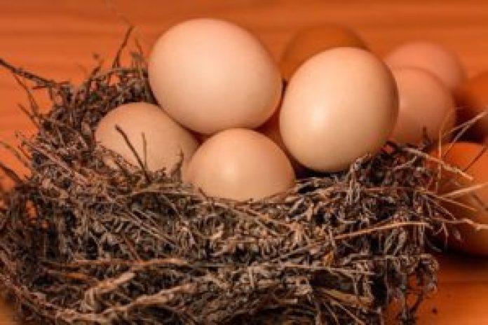 鸡蛋:促进大脑发育(pixabay)
