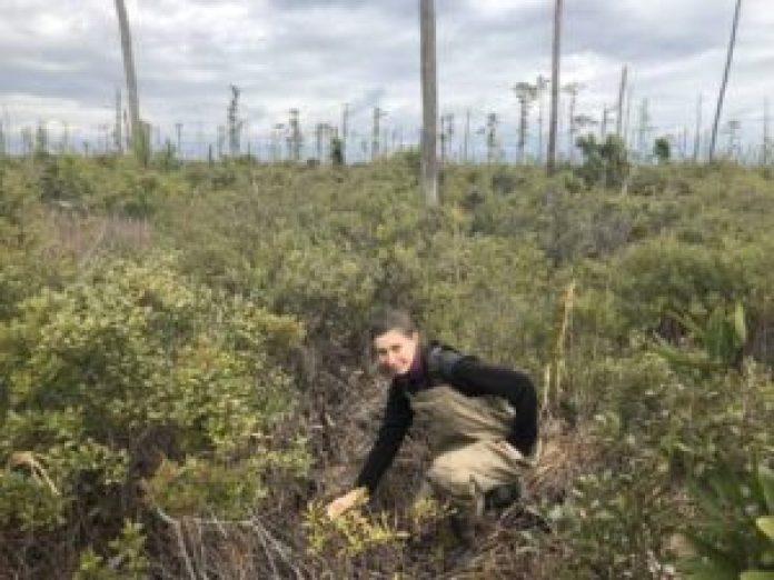 首席研究作者艾米丽·乌里(Emily Ury)在北卡罗来纳州的一个幽灵森林中测量土壤盐分。 (图片来源:杜克大学/Emily Bernhardt)