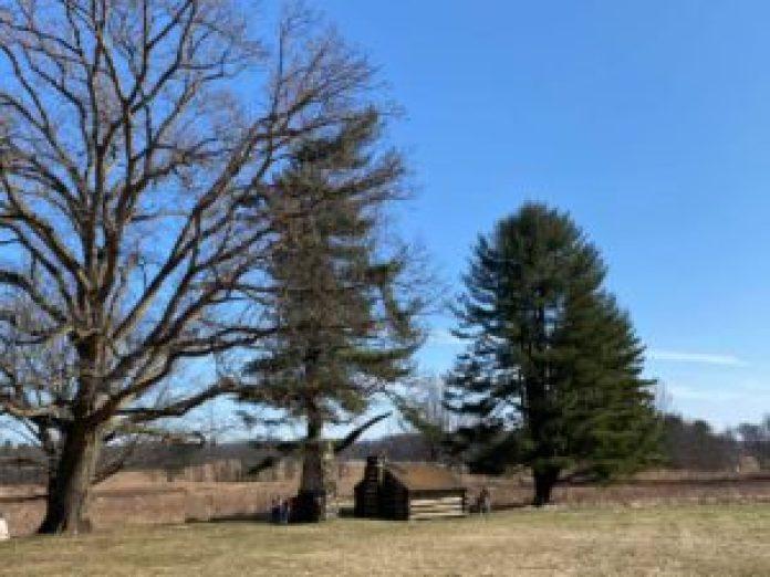 福吉谷的大樹還是當年留下的