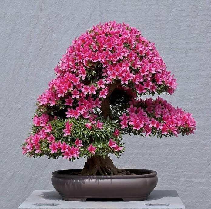传统艺术形式《盆 栽 观 赏》