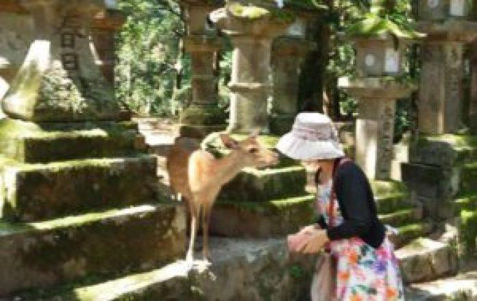 奈良的小鹿會行禮