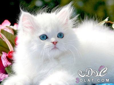 صور قطط جميلة جدا 2020 أجمل صور القطط في العالم 2020 صور
