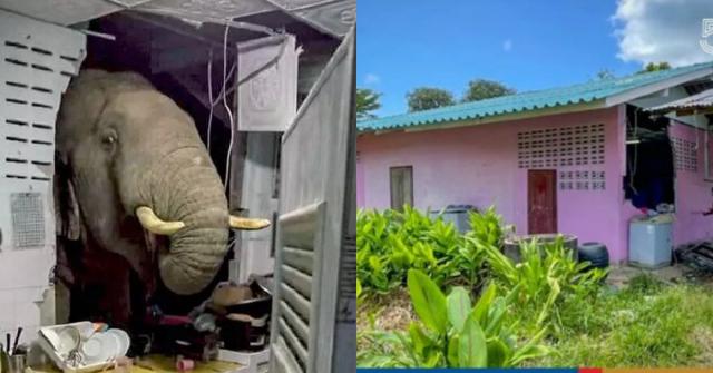 Dapur rumah pecah disondol gajah liar yang lapar.