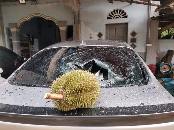 durian viral rm 500