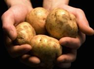Aldi makes Welsh potato commitment