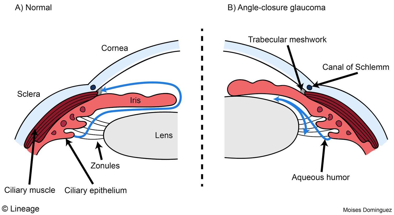 What Does The Eye Look Like Diagram Of The Eye Boozmanhof