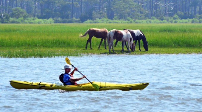 A kayaker passing two Chincoteague ponies on Assateague Island, Virginia
