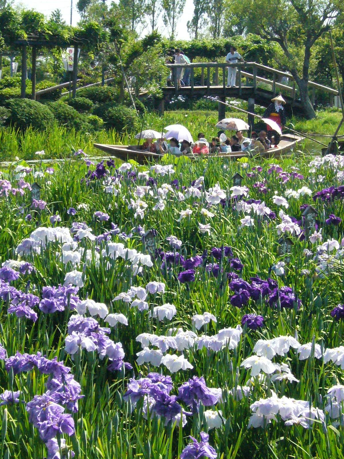 Suig Sawara Aquatic Botanical Garden Wikipedia