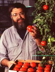 Flavr Savr tomatoes