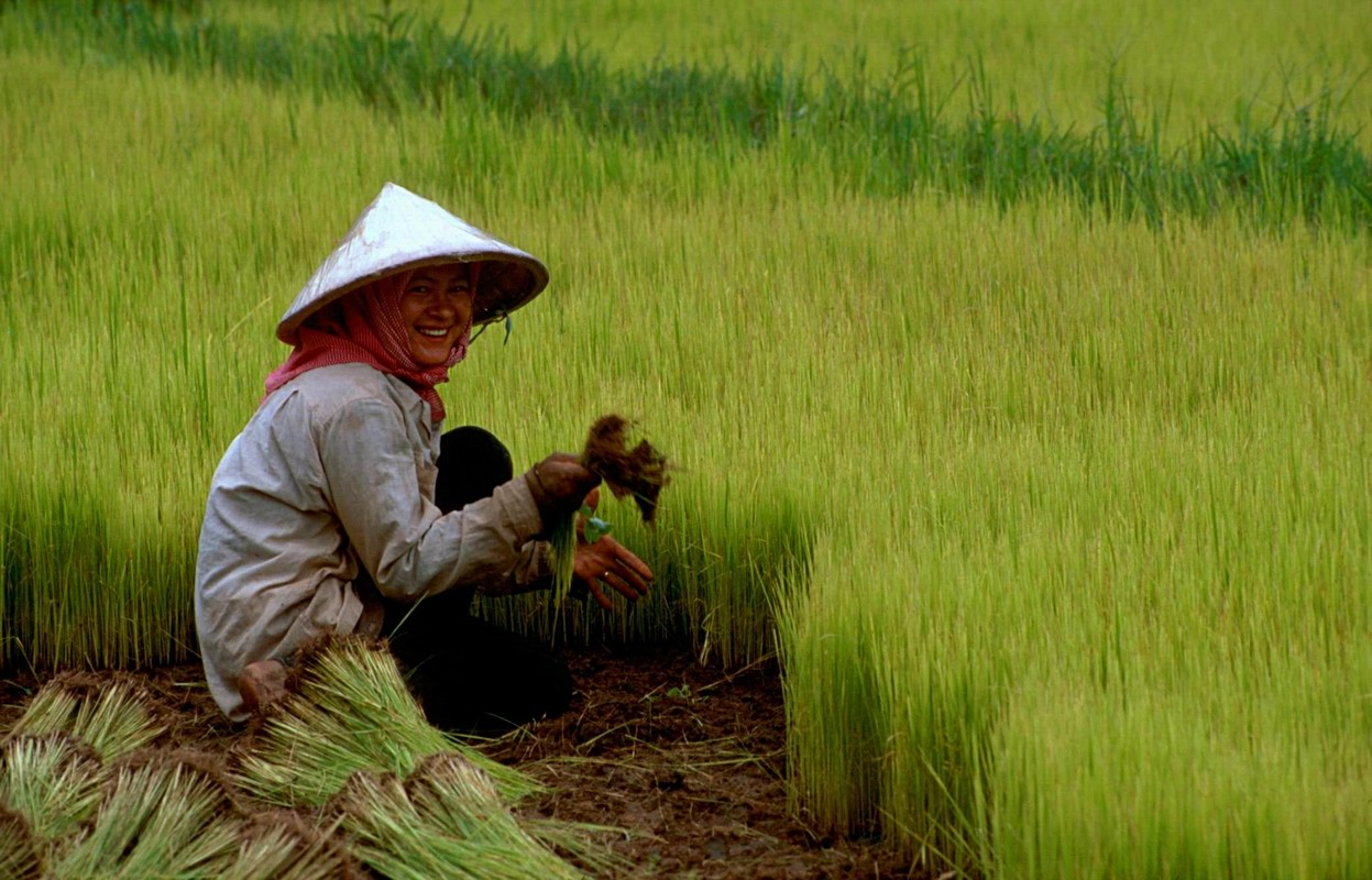 https://i2.wp.com/upload.wikimedia.org/wikipedia/commons/0/07/Rice_02.jpg
