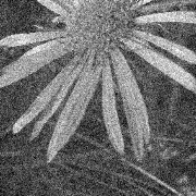 A noisy image of a flower, used for demonstrat...