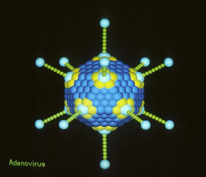 capsid virus