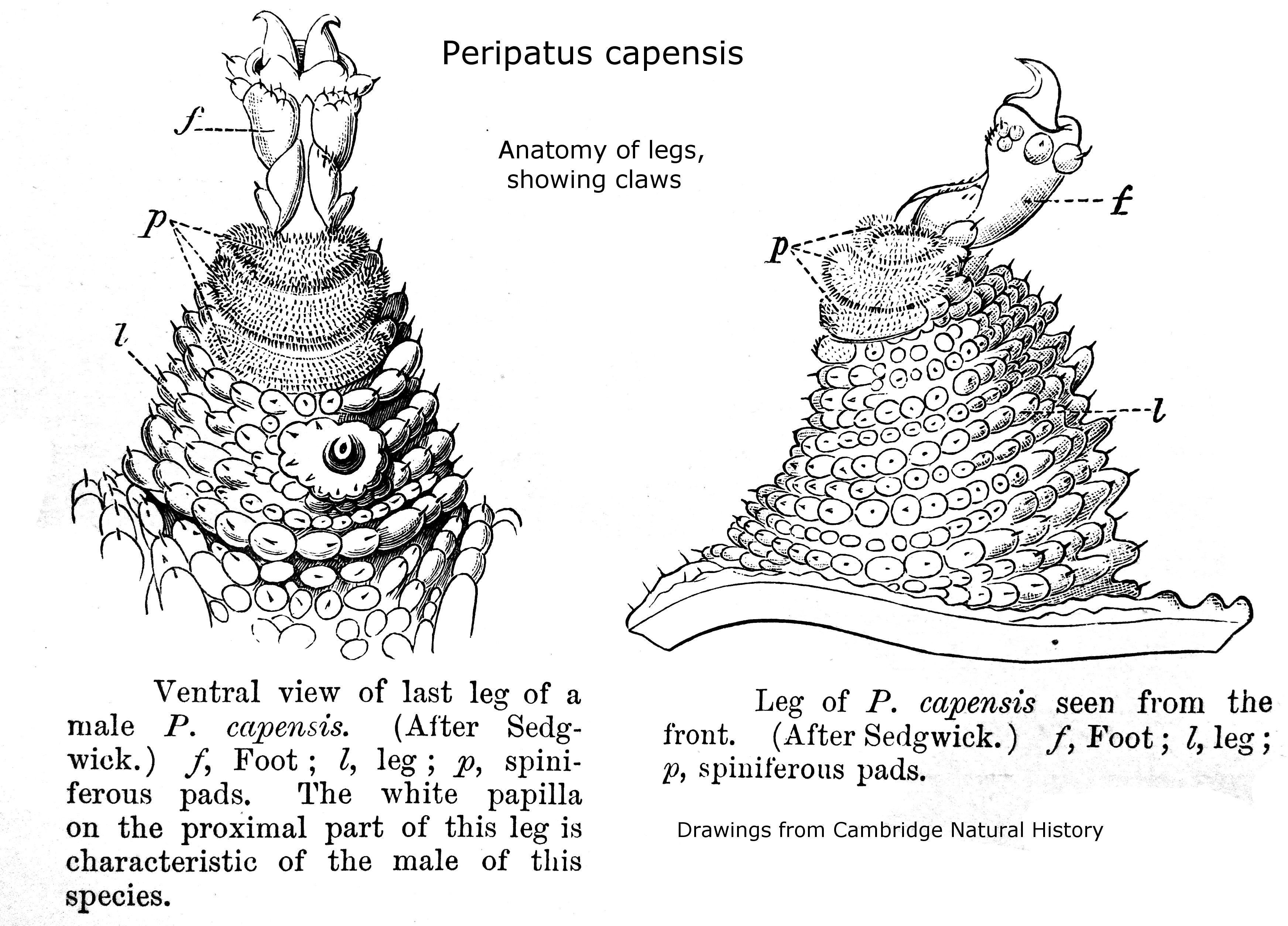 Swarmers Termites January