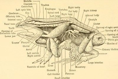 the different parts of a frog