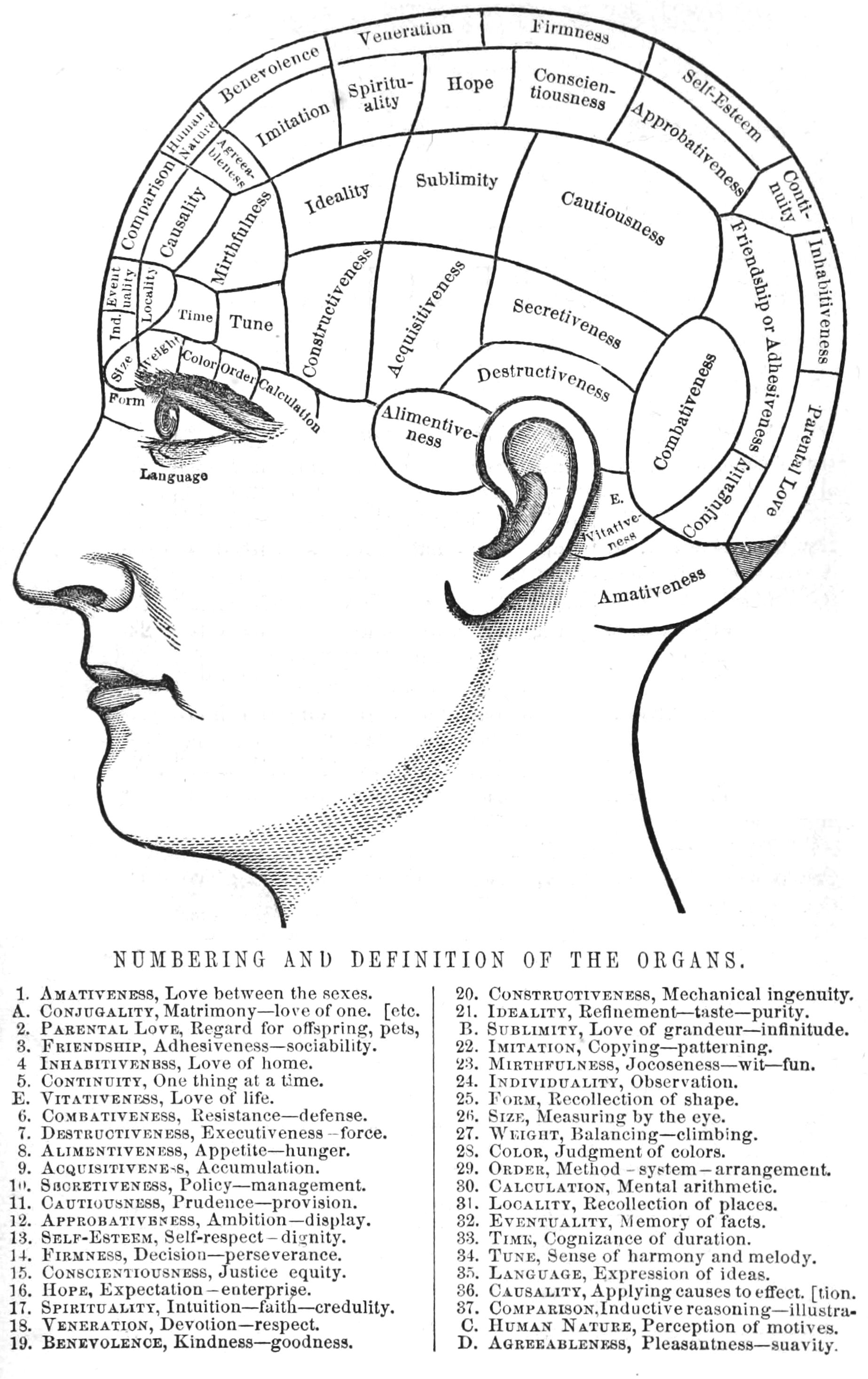 File Phrenology Numbering And Definition Of The Organs