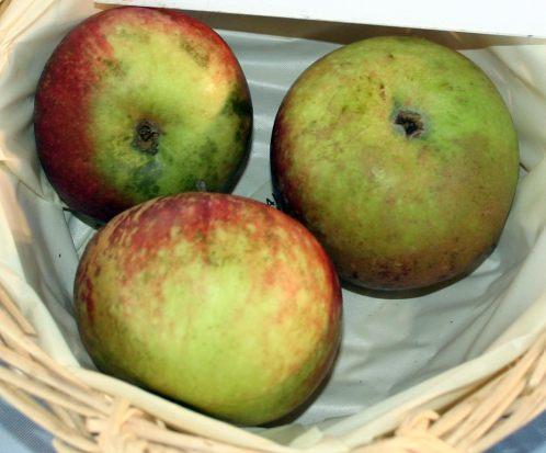 Ingrid Marie äpplen i en korg