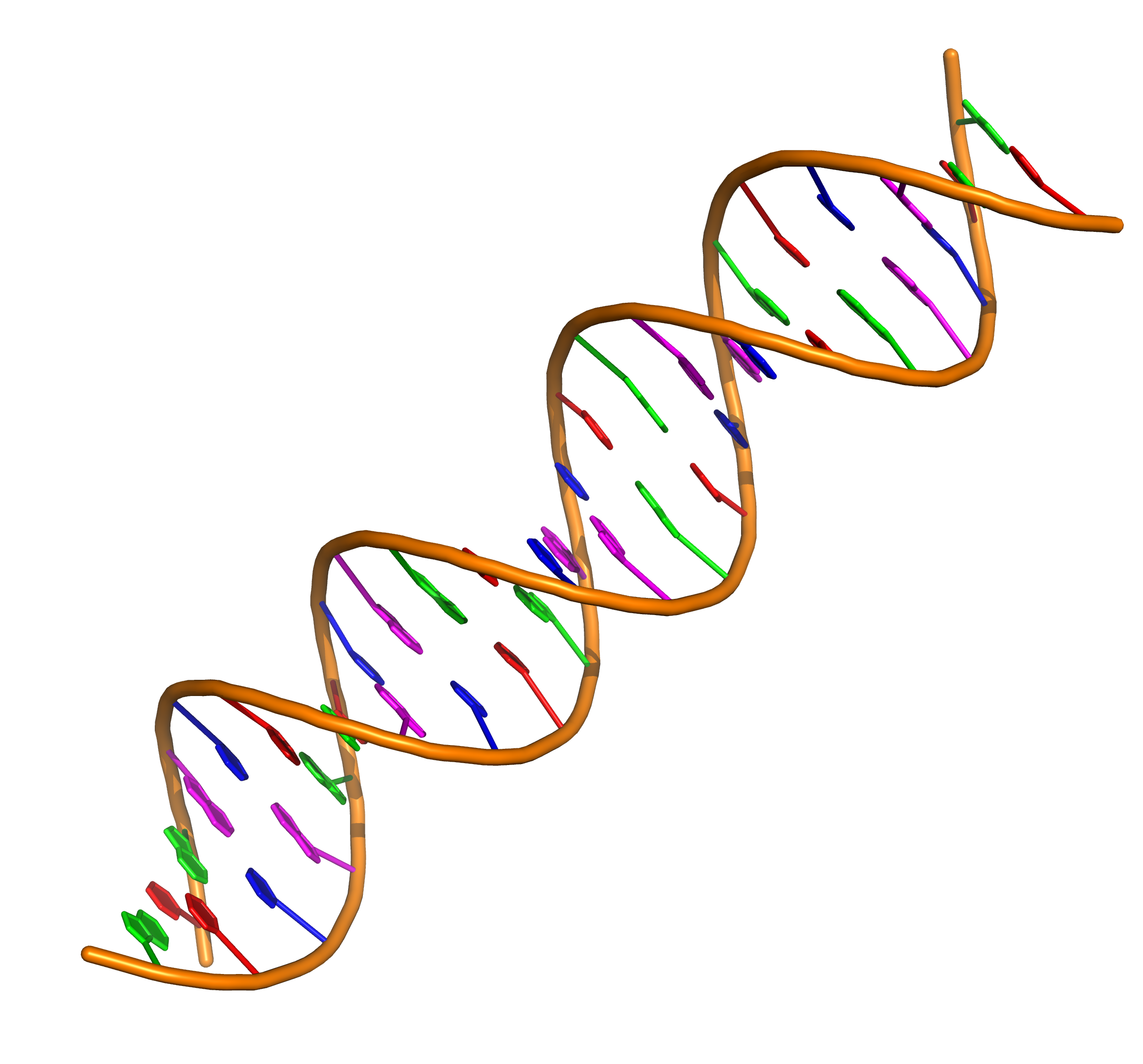 File Double Stranded Dna With Coloured Bases