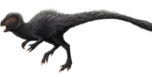 https://i2.wp.com/upload.wikimedia.org/wikipedia/commons/1/14/Heterodontosaurus_restoration.jpg?resize=500%2C255&ssl=1