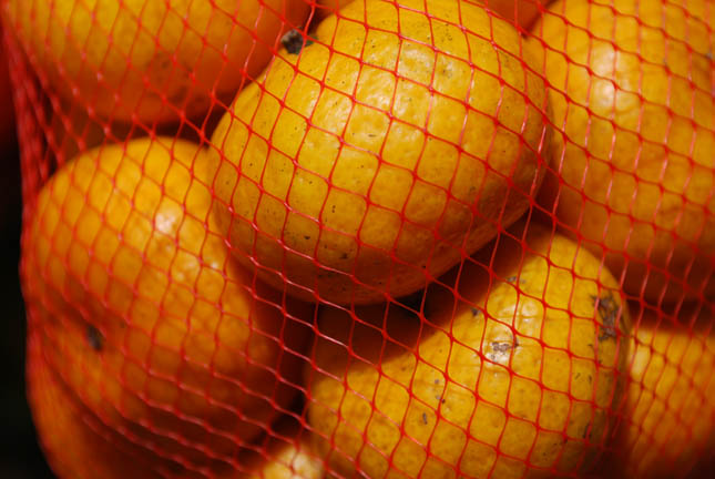 Oranges in netting bag