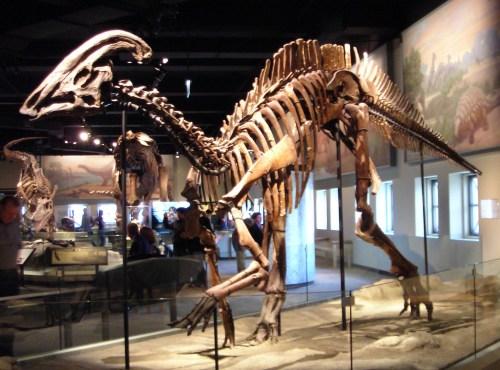 https://i2.wp.com/upload.wikimedia.org/wikipedia/commons/1/14/Parasaurolophus_cyrtocristatus.jpg?resize=500%2C370&ssl=1