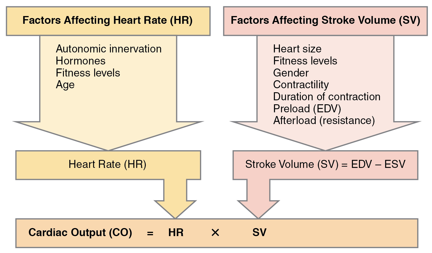File Factors In Cardiac Output