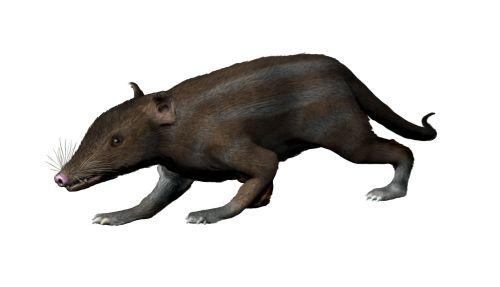 Mamíferos placentarios: Juramaia Sinensis