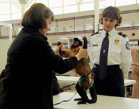 An image of a TSA screener inspecting a servic...