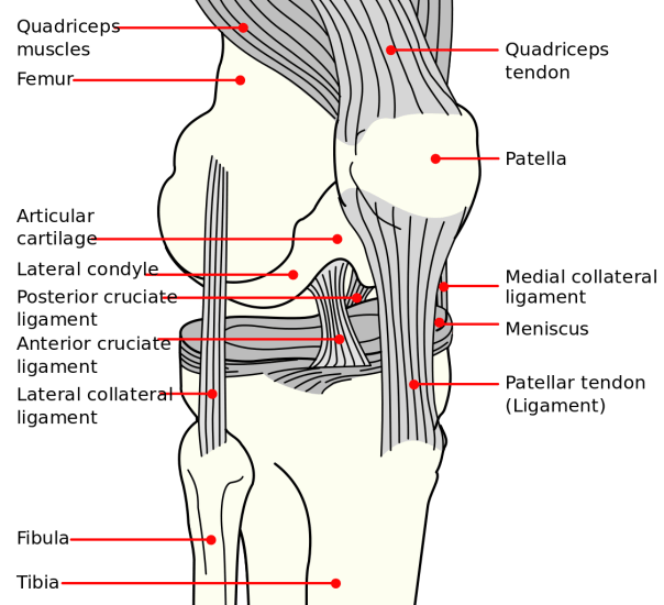Common Knee Tests In Orthopedic Examination Physical Therapy Web