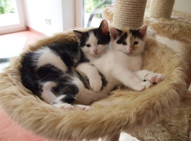 Image result for cats sharing bed