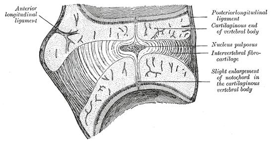 colonne paléo québec