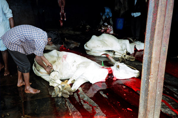 https://i2.wp.com/upload.wikimedia.org/wikipedia/commons/1/1b/Cow_slaughter.jpg