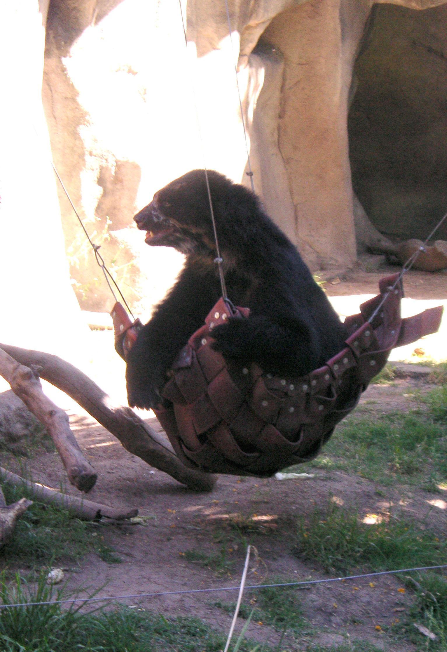 File Bear In A Hammock