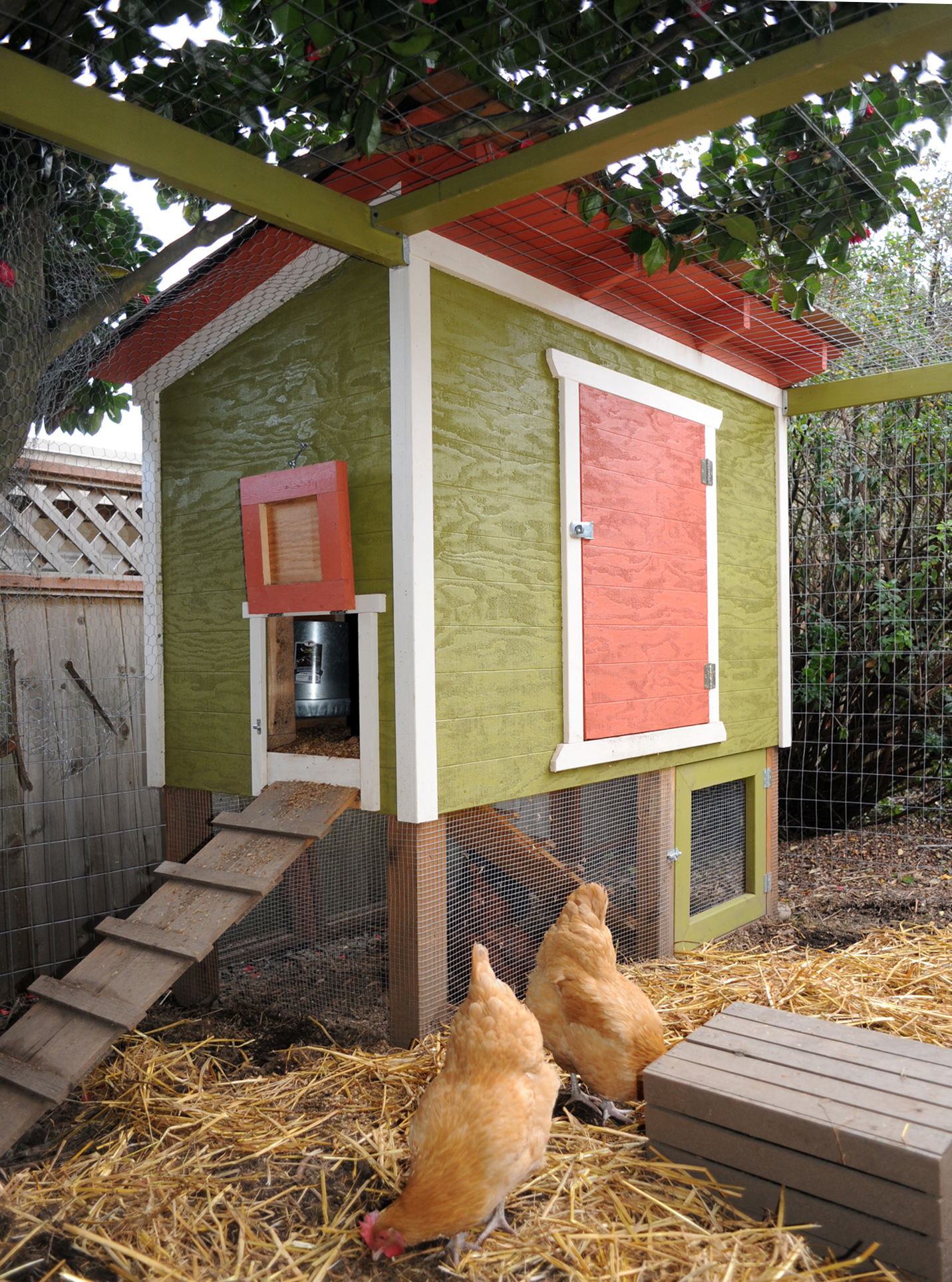 getting started with backyard chickens scratch cradle
